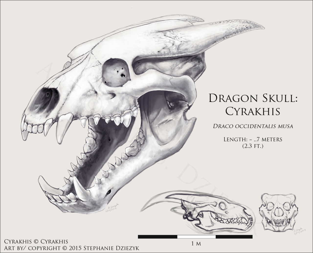 Dragon Skull - Cyrakhis by LeccathuFurvicael -- Fur Affinity [dot] net
